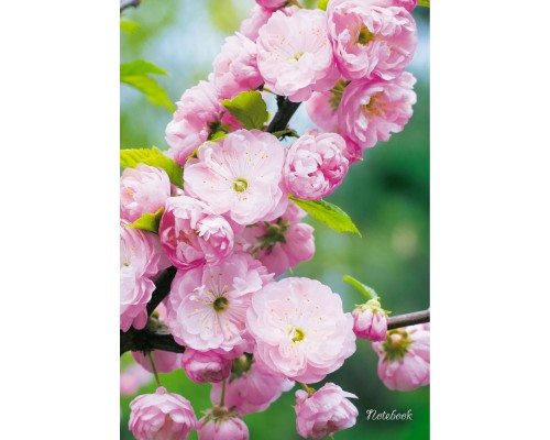 Книга для записей А4 100 листов Весенний сад